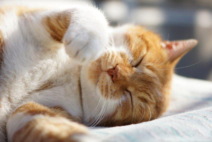 「猫 喉を鳴らす」の画像検索結果