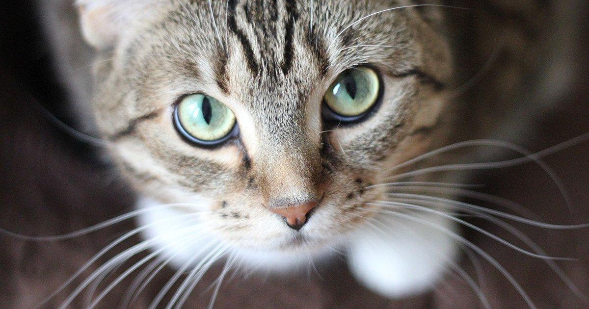 「猫 ヒゲ」の画像検索結果