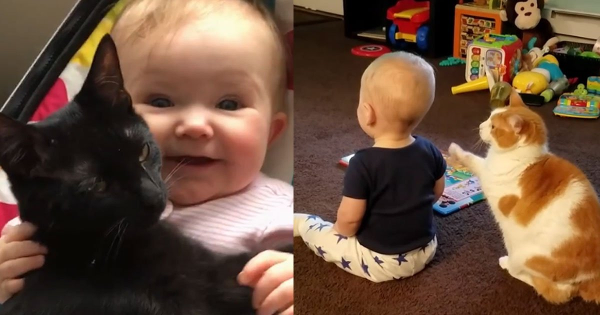 the cutest bond between babies and cats will melt your heart.jpg?resize=1200,630 - When Baby Meets Cat, Precious Bond Between Them Will Melt Your Heart