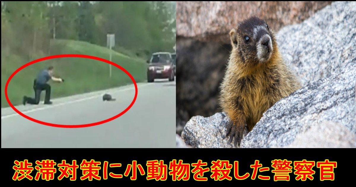 "unnamed file 26.jpg?resize=412,232 - 【渋滞を避ける為!?】道路を渡る小動物を""銃で撃ち殺した""警察に避難殺到..."