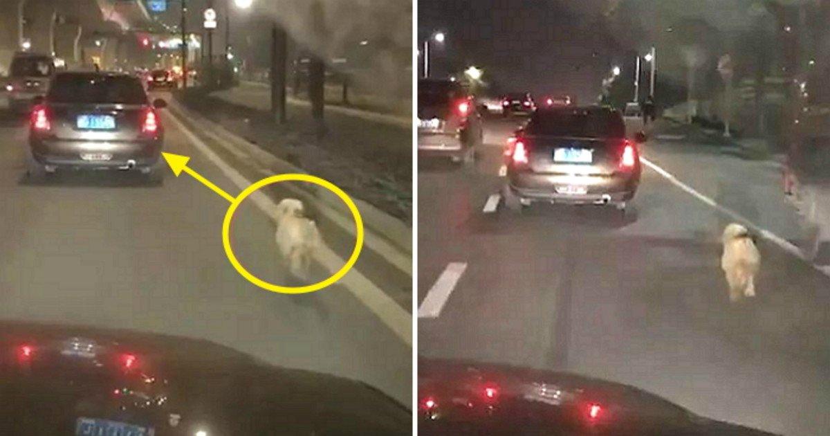 unnamed file 29.jpg?resize=300,169 - 捨てられたことを知らずに飼い主の車を追いかける子犬..