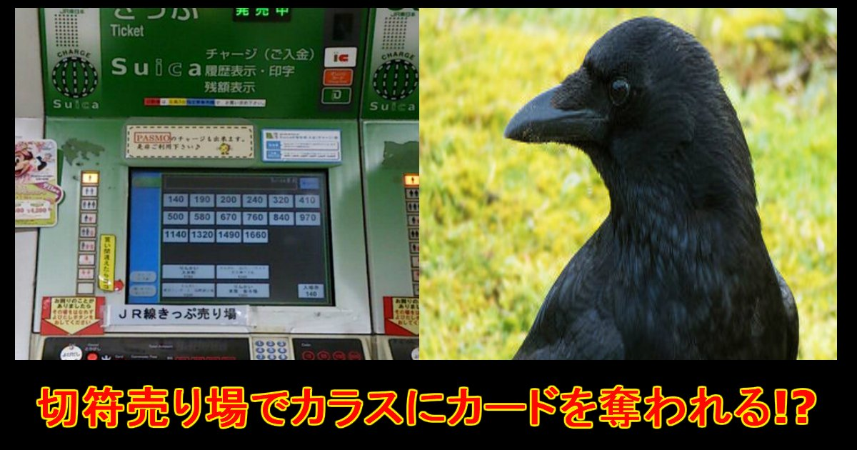 unnamed file 7.jpg?resize=1200,630 - 【注意喚起も!】カラスが駅券売機で驚きの行動に.....!