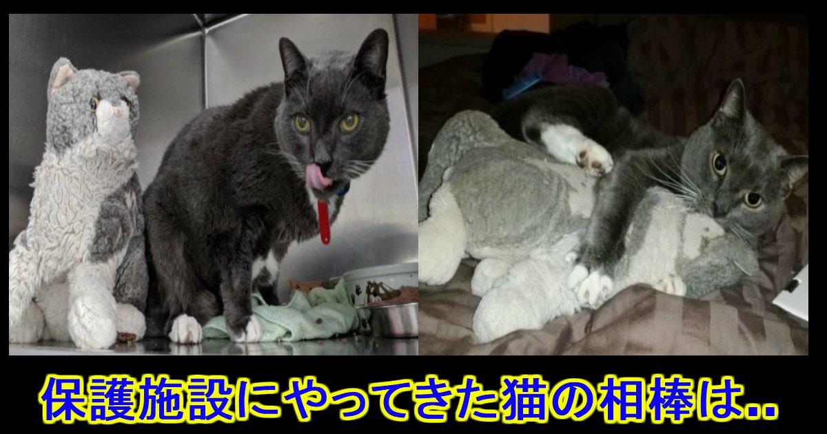 unnamed file 9.jpg?resize=1200,630 - 亡くなった飼い主に貰った人形を抱きしめて...保護施設に来た一匹の猫。