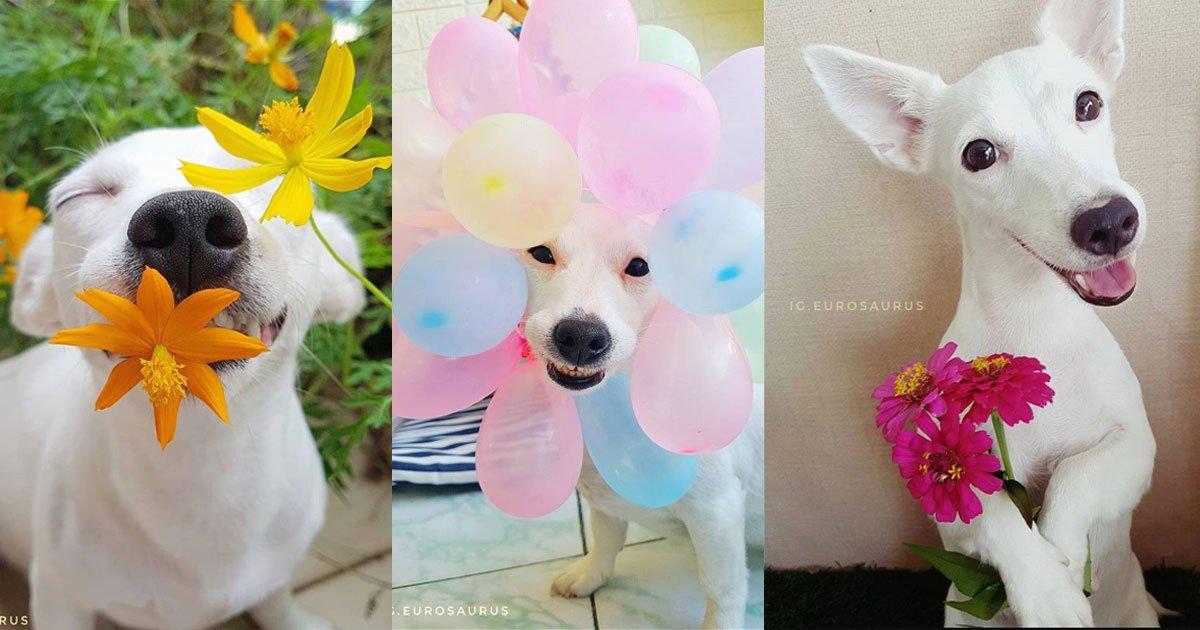 untitled 1 11.jpg?resize=300,169 - La sonrisa y simpatía de este perrito le ha hecho tener miles de seguidores en Instagram ¡Es adorable!