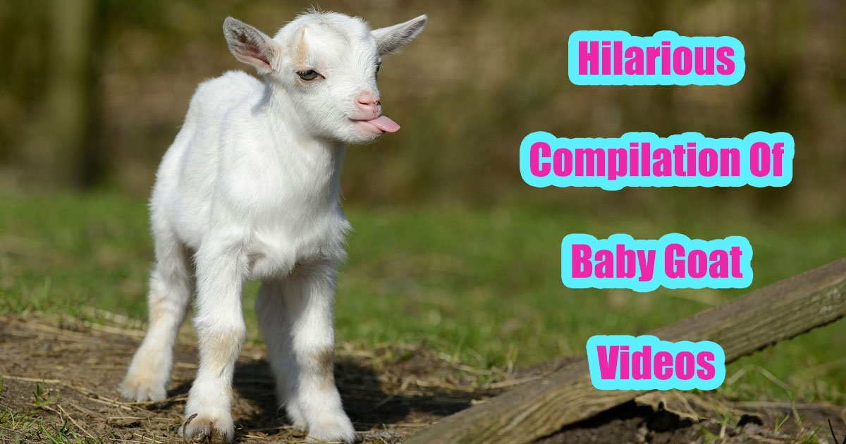 untitled 1 32.jpg?resize=648,365 - Hilarious Things Happen When Baby Goats Meet Children And Other Animals