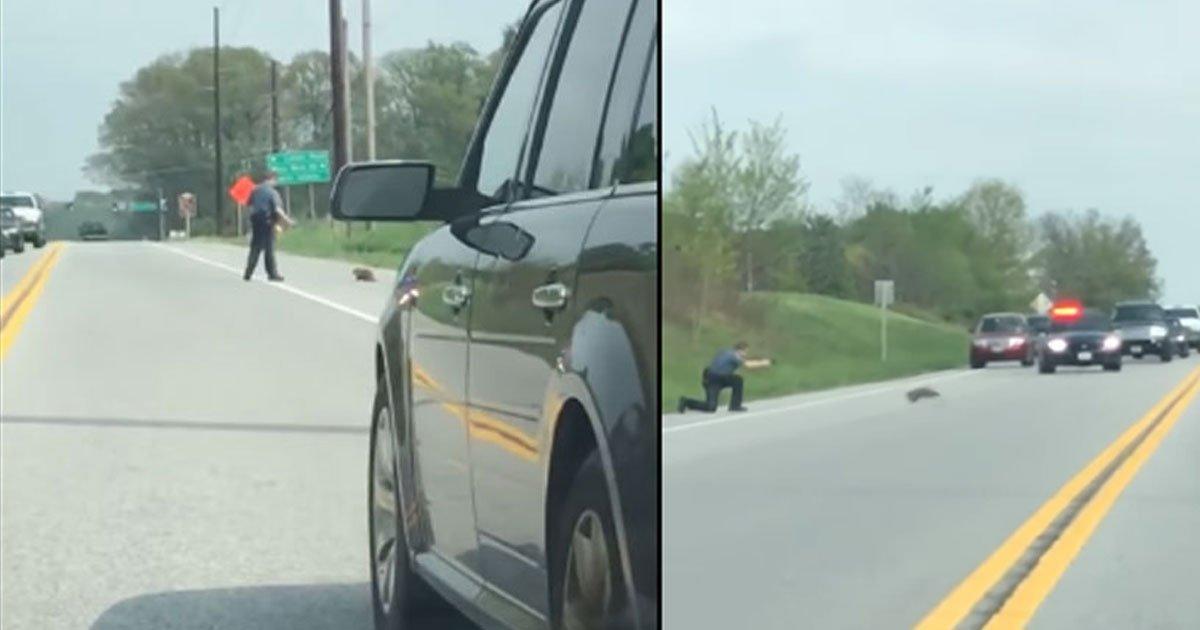 untitled 1 39.jpg?resize=300,169 - Vidéo : Un policier abat un rongeur au comportement étrange entravant le trafic routier.