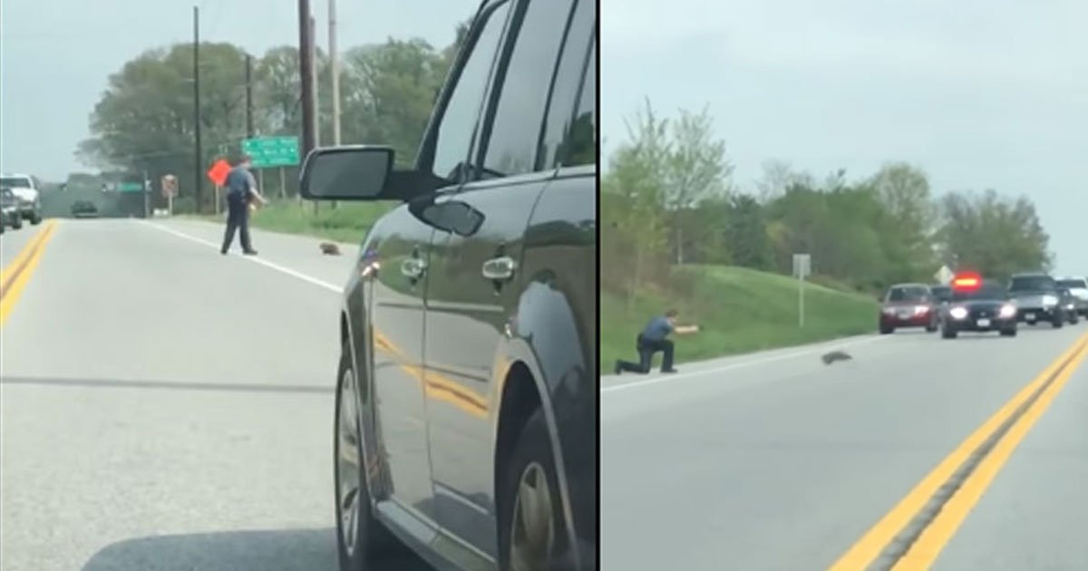 untitled 1 39.jpg?resize=412,275 - Cop Shot At Rodent That Was Behaving Abnormally And Obstructing Traffic