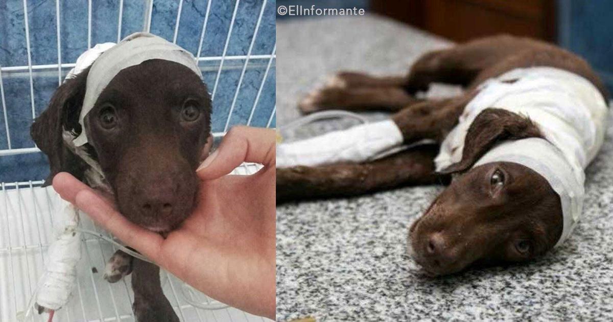 untitled 1 79.jpg?resize=300,169 - Un perrito fue cruelmente despellejado por un hombre, será el primer caso de este tipo juzgado en Argentina