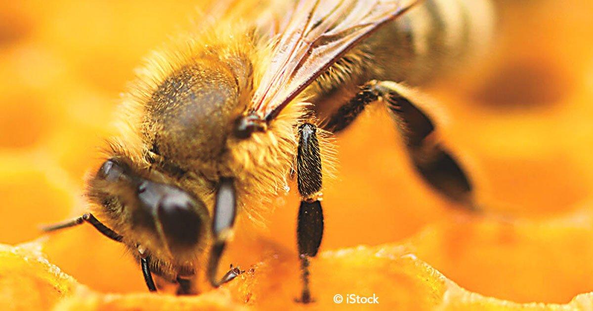 untitled 1.jpg?resize=1200,630 - Han declarado a las abejas como la especie más importante del planeta, si desaparecieran sólo quedarían 4 años de vida