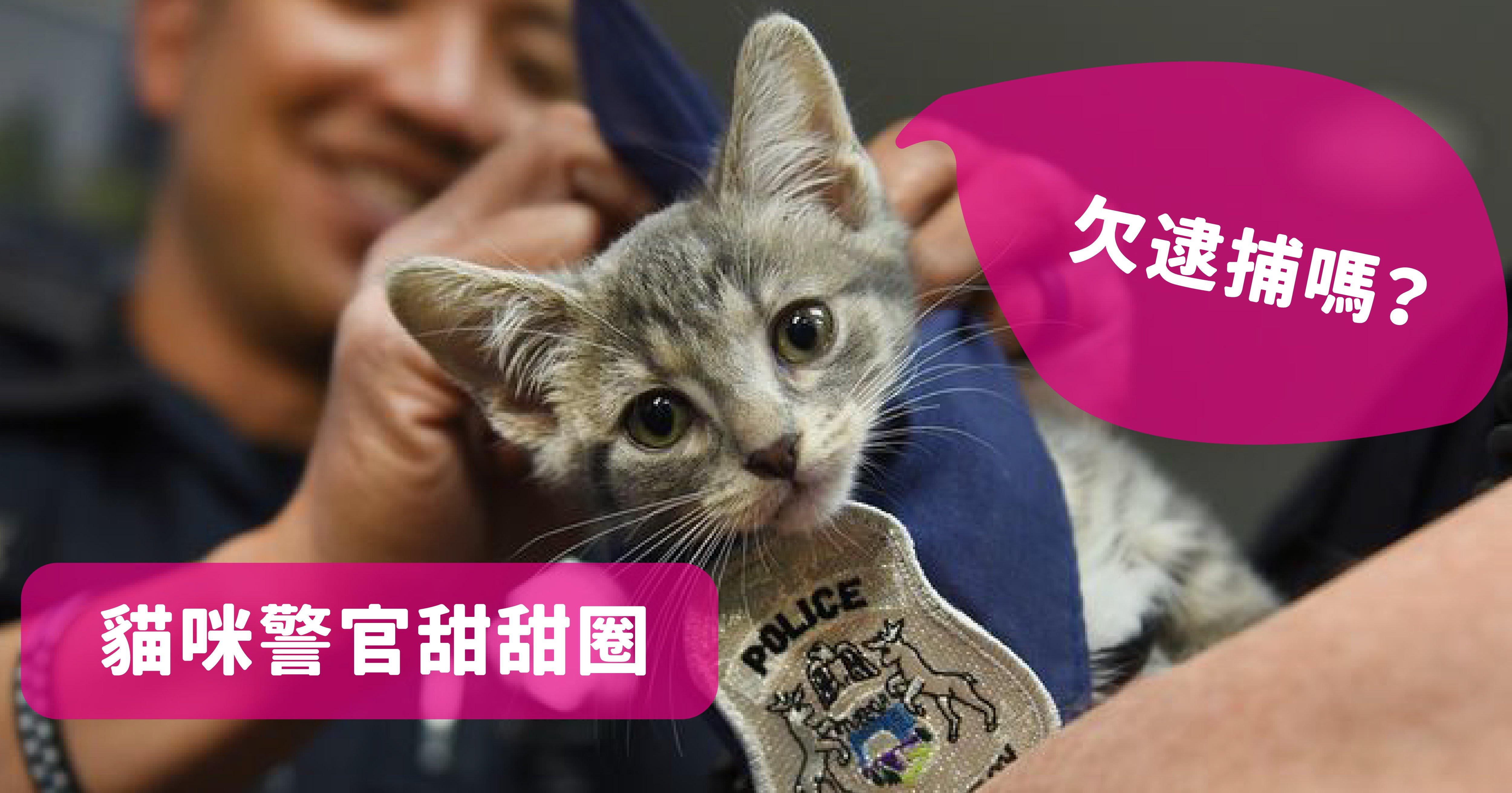 vonvone5b081e99da2 e8b293 01.png?resize=1200,630 - 美國警局為了衝人氣雇用超萌「警貓」,警察們都融化成貓奴啦~