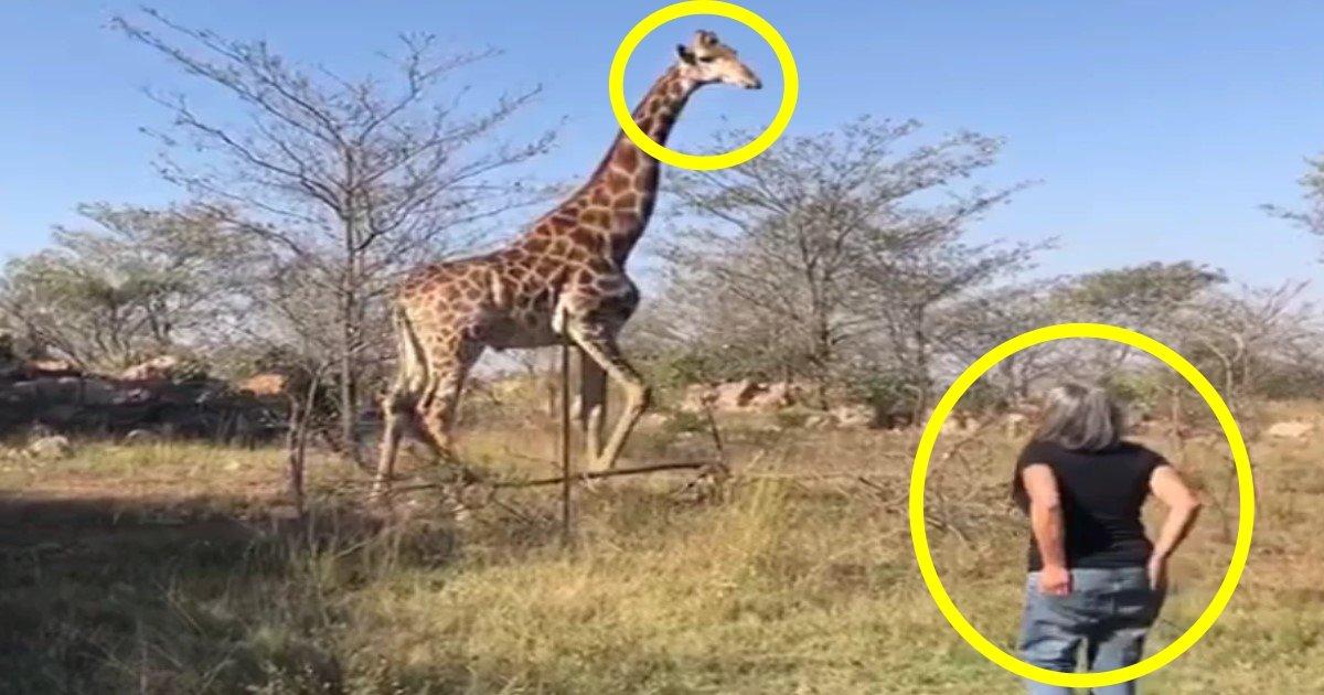 w 4.jpg?resize=1200,630 - Tué par une girafe, la veuve du réalisateur Carlos Carvalho a décidé de rencontrer l'animal pour faire son deuil.