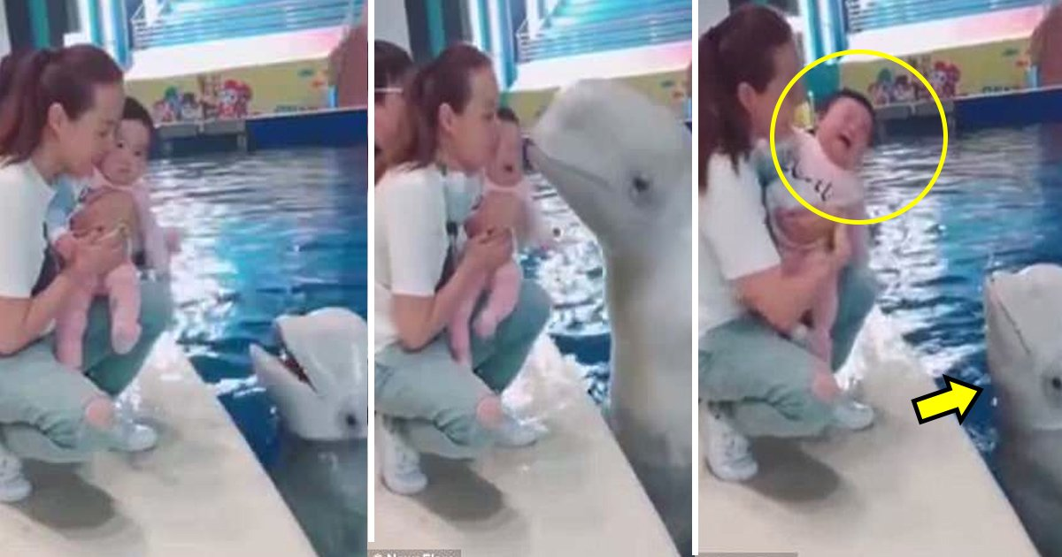 whale.jpg?resize=300,169 - Hilarious Video Shows A Whale Kisses A Little Baby And The Baby Starts Crying