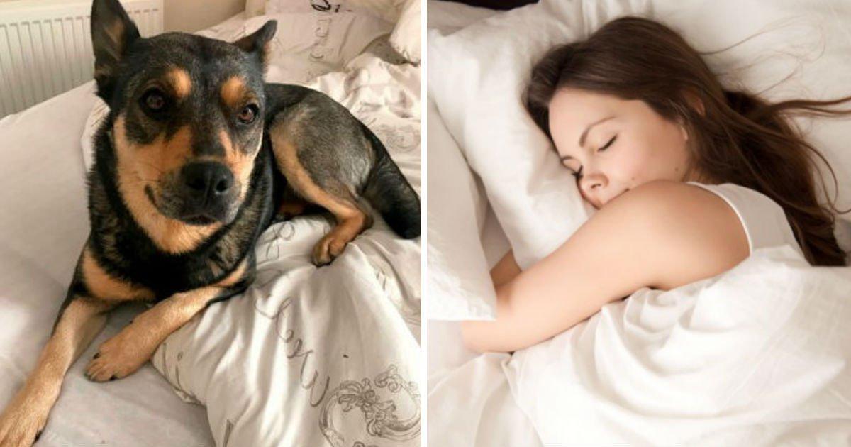"""123 6.jpg?resize=412,232 - """"술 마신 다음 날 깨어나 보니 침대에 모르는 '강아지'가 있었어요"""""""