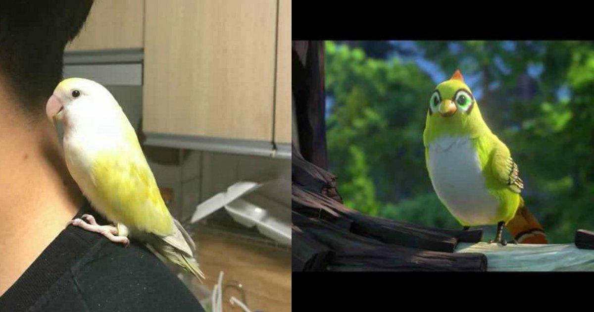 3 202.jpg?resize=300,169 - 인터넷에서 '국민대 바스티온'으로 유명한 새를 주운 한 남성