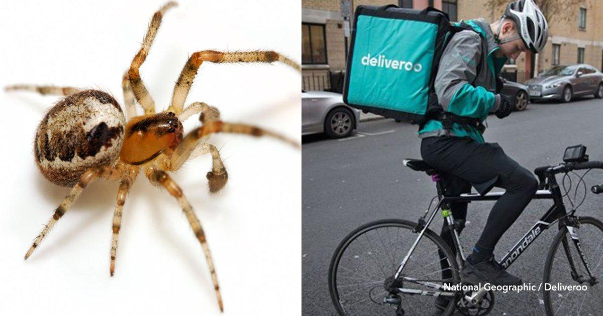 3 cov 7.jpg?resize=412,232 - Ella tiene fobia a las arañas y decidió pedir comida a domicilio para que el repartidor elimine a una en su casa