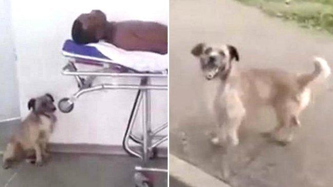 444 5.jpg?resize=1200,630 - 飼い主が心配で全力尽くして「救急車」を追いかける犬(ビデオ)