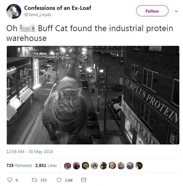 Une image sur Twitter montre Buff Cat à la recherche d'un entrepôt rempli de protéines
