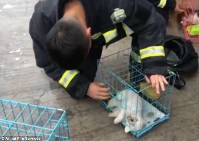 Un pompier vérifie l'un des chiens sauvés pour voir s'il est