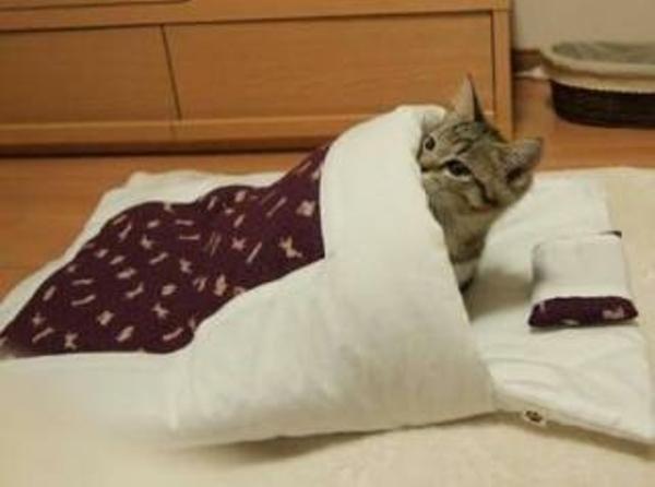 「電気 つけたまま 寝る」の画像検索結果