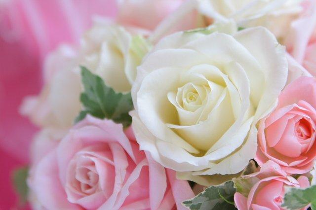 「バラを食べる夢」の画像検索結果