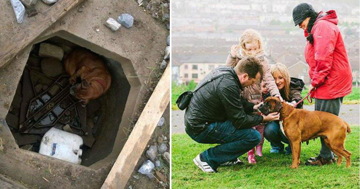 abandoned bella.jpg?resize=1200,630 - Garota de 6 anos de idade descobre cão frágil e idoso abandonado em buraco de concreto e recebe ajuda
