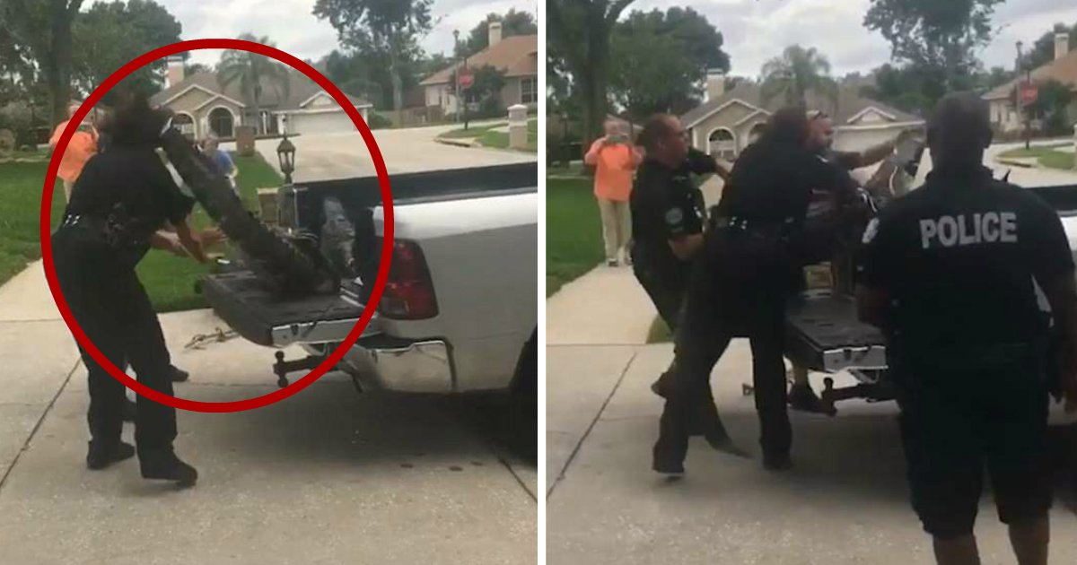 alligator headbutt.jpg?resize=412,232 - Alligator Headbutts Policeman, Knocking Him Out Before Swatting Away Other Officers With Tail