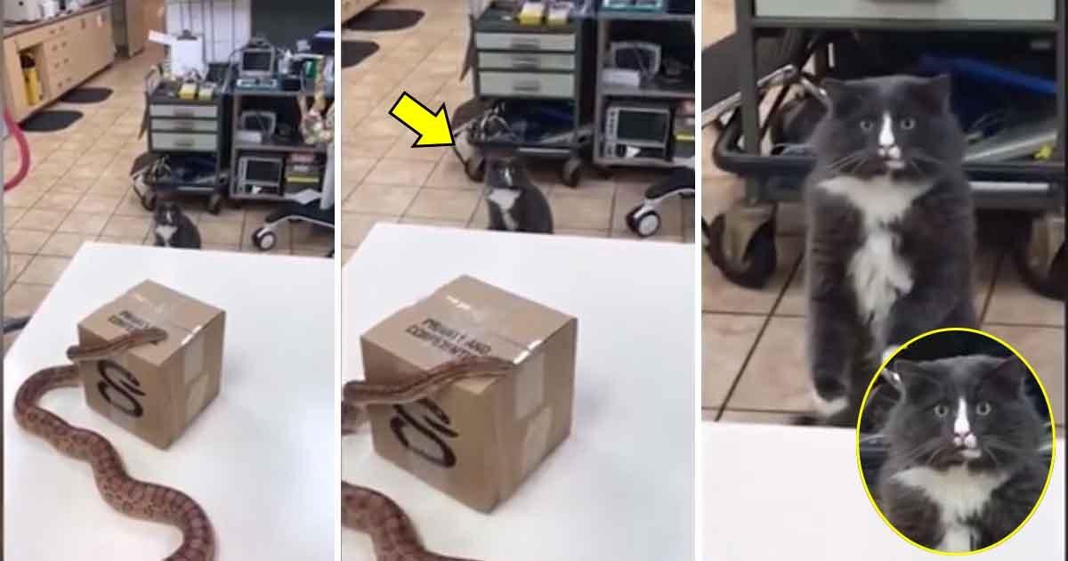 artas.jpg?resize=1200,630 - Un chat est ÉTONNÉ de voir un serpent pour la première fois lors d'une visite chez le vétérinaire