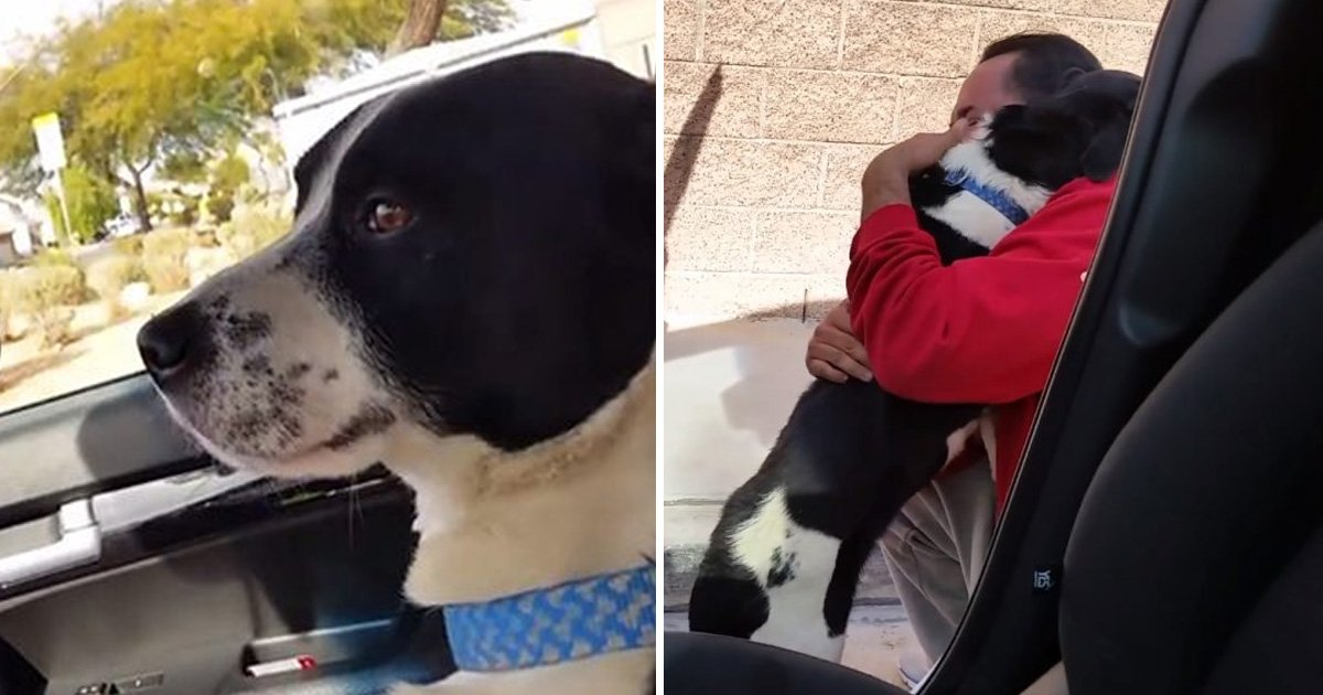 asfdasdf.jpg?resize=1200,630 - Heartwarming Moment Lost Dog Was Finally Reunited With Loving Family
