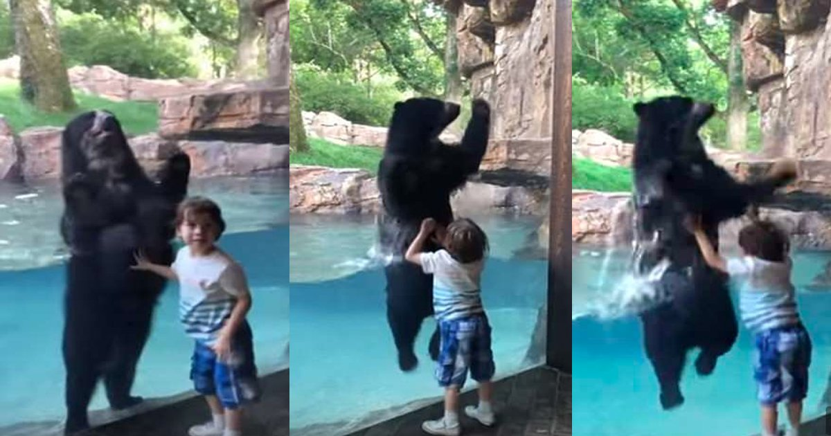 bear.jpg?resize=412,232 - Incredible Video Of A 5-year-old Boy And An Andean Bear Jumping Together In Sync At Nashville Zoo Has Gone Viral