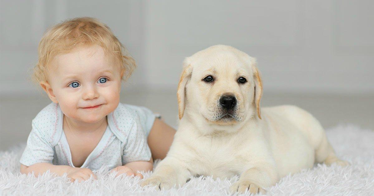 bebecachorro.png?resize=412,232 - Ter cachorro em casa deixa seu bebê mais saudável, diz estudo