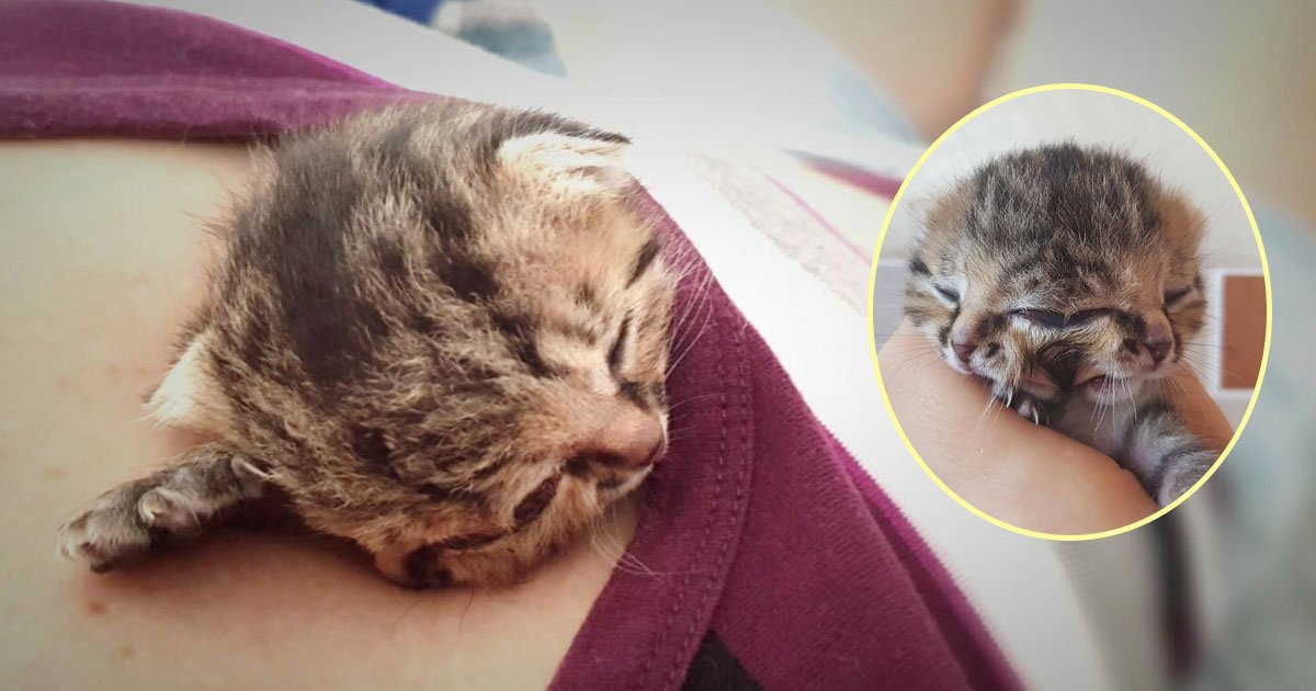 bettie bee kitten 1.jpg?resize=636,358 - Kitten Born with Two Faces Saved By Woman Who Never Gave Up On Her Despite the Odds