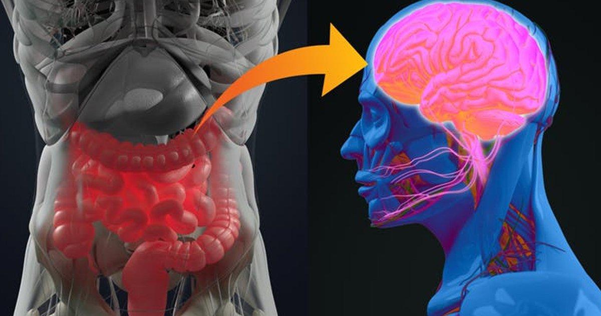 brain.jpg?resize=1200,630 - Cientistas descobrem que temos dois cérebros: o segundo está no intestino!