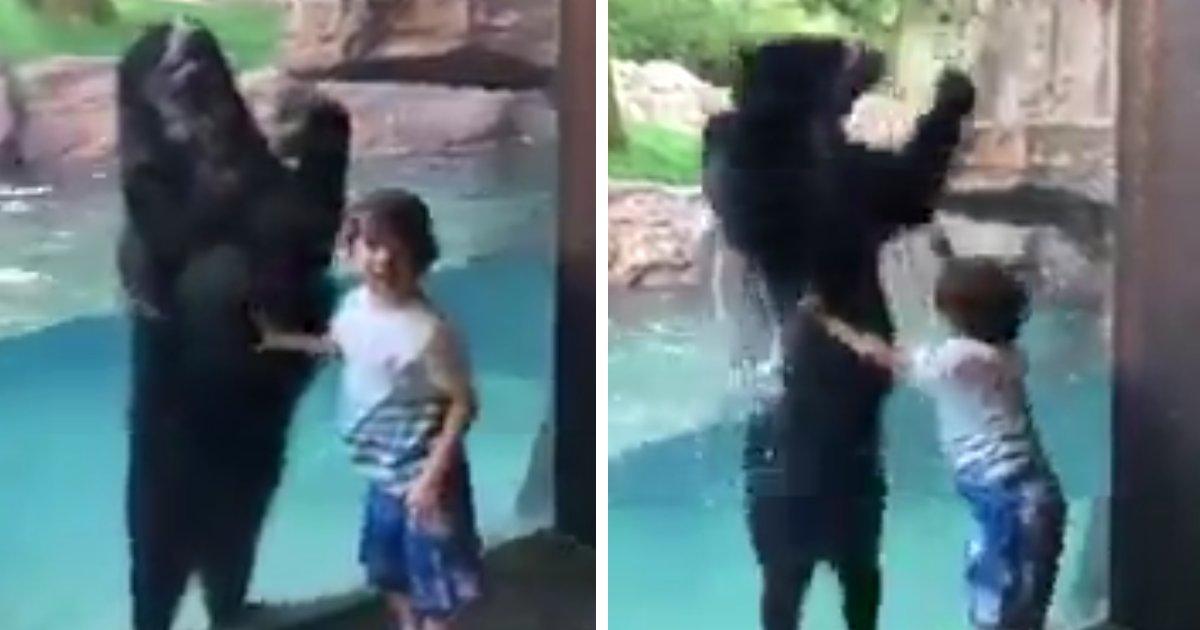 capa00.png?resize=1200,630 - Vídeo adorável mostra um urso pulando junto com uma criança
