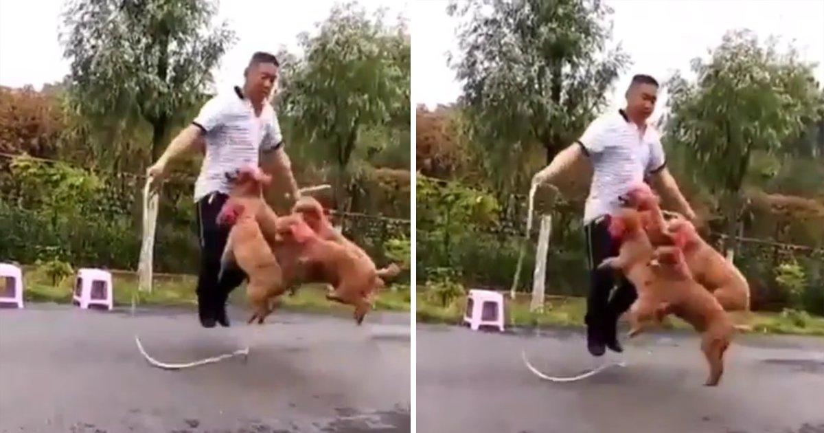 capa00dgtsue.png?resize=1200,630 - Vídeo incrível mostra um homem pulando corda com 4 cachorros
