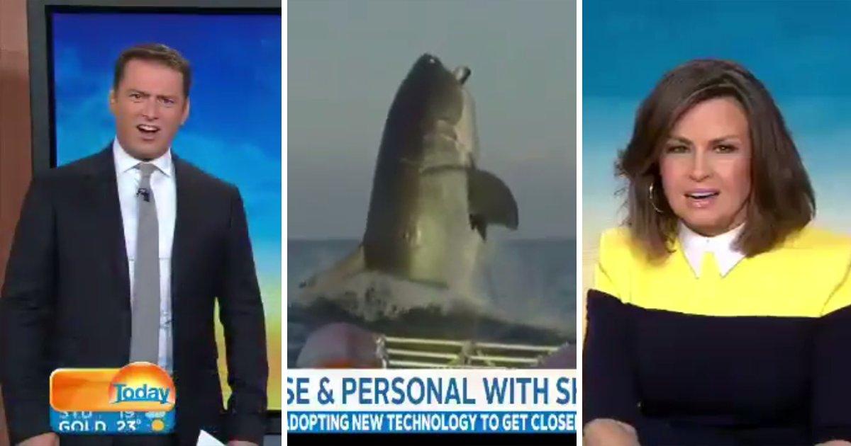 capa111.png?resize=1200,630 - Apresentadores de um jornal não conseguem segurar suas expressões horrorizadas ao verem imagens de um tubarão gigante