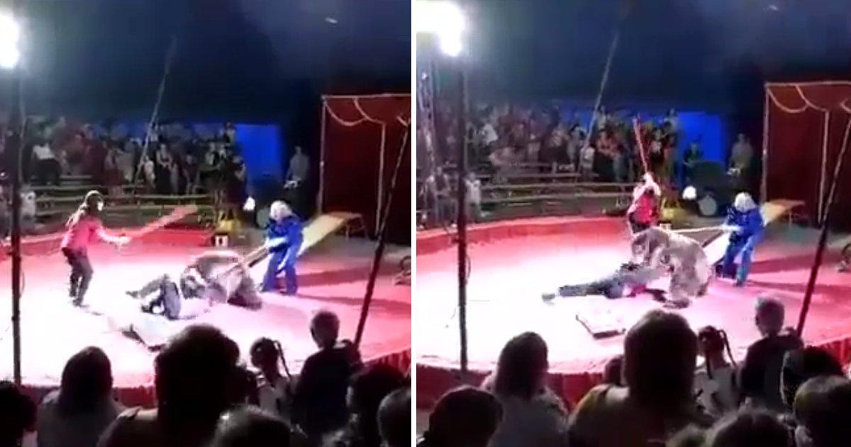 capa1tt.png?resize=412,232 - Urso de circo na Rússia ataca seu treinador após apanhar com uma vara