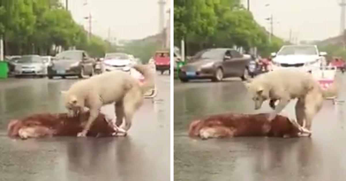 """capa1ttfg.png?resize=1200,630 - Cachorro tenta """"acordar"""" amigo morto no meio de uma avenida"""