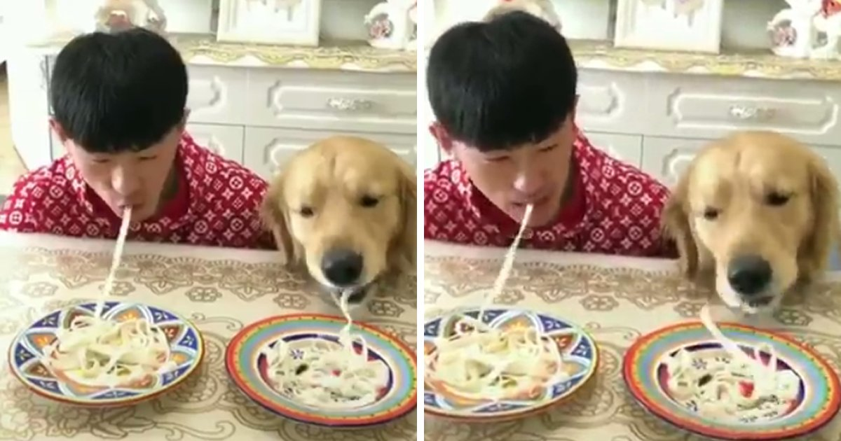 capa443.png?resize=412,232 - Competição: Cachorro X Humano, quem come o macarrão mais rápido?