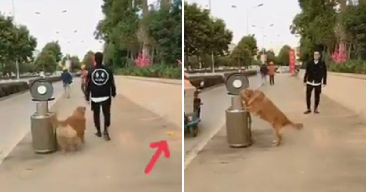 capaa2.png?resize=300,169 - Cachorro inteligente junta lixo no chão e joga na lixeira sem o dono pedir