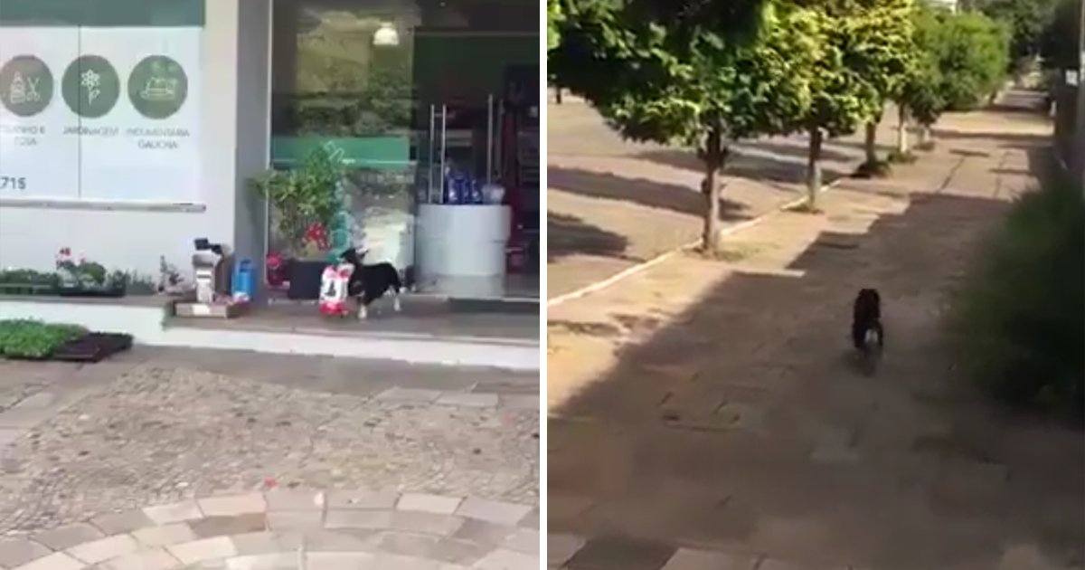 capaa3.png?resize=1200,630 - Cachorrinho é flagrado roubando ração de um Pet Shop!