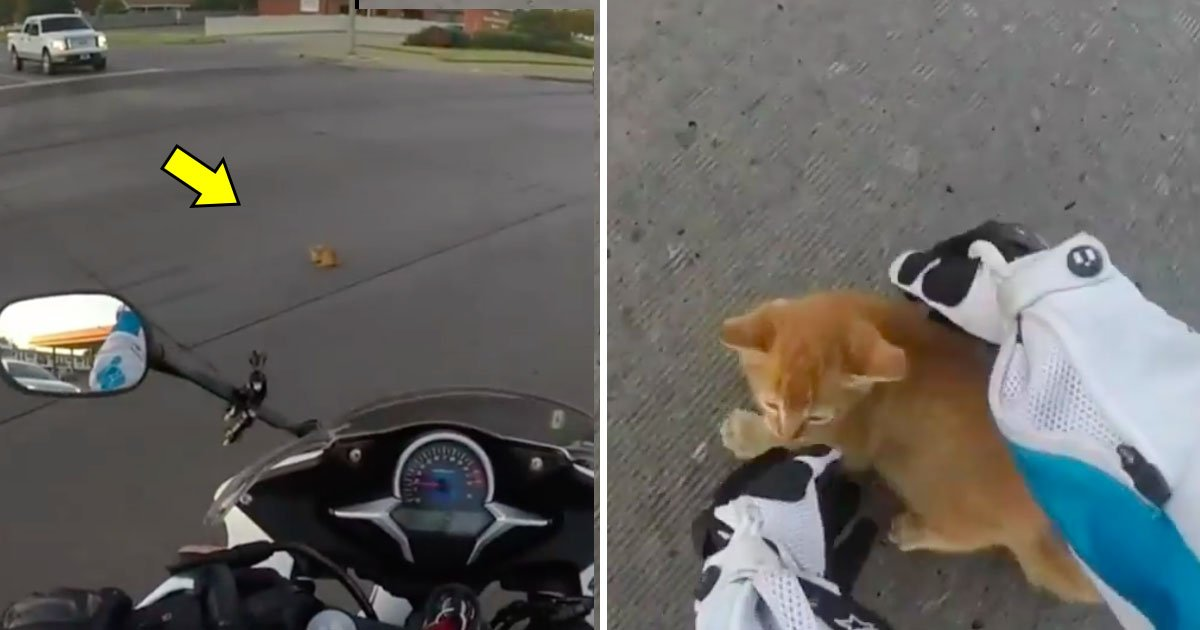 cat 12.jpg?resize=648,365 - Biker Sees Orange Spot at Busy Road Junction—When She Knows It's Alive, She Leaps Into Action