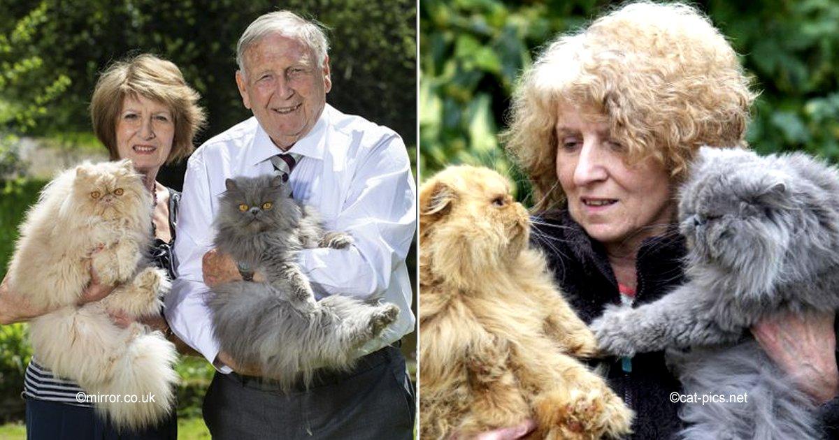 cats.jpg?resize=648,365 - Ella decidió tener 10 gatos y por eso él le pidió el divorcio, cuando tenía 40 él regresó para casarse