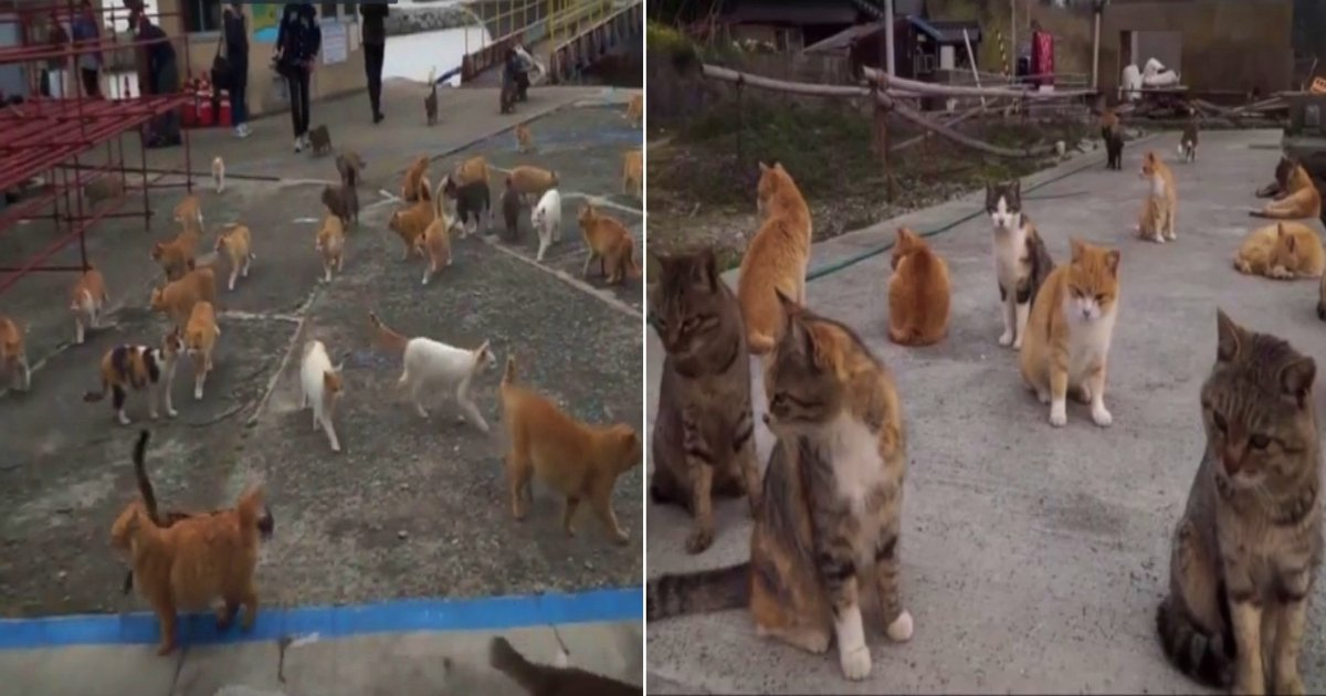 ccat side.jpg?resize=1200,630 - Island Full Of Cats—Cats Outnumber Humans 6 To 1 On This Island