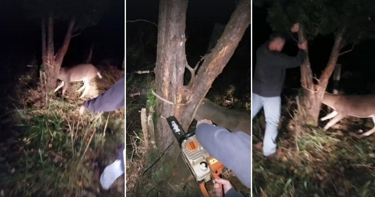 deer.jpg?resize=412,275 - Hunter Chose To Help A Deer That Got Its Antlers Stuck In A Tree