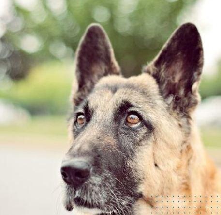 dog-14