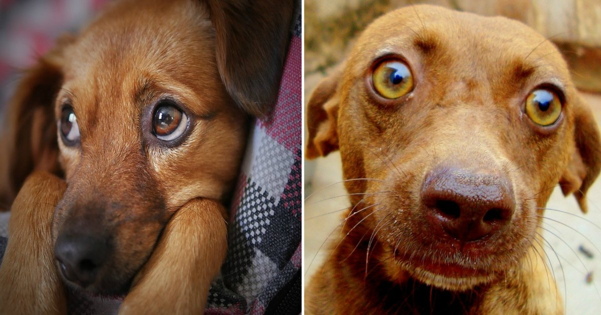 dog expressions.jpg?resize=412,232 - Have Your Dog Followed You Into The Bathroom? Here Are Common Dog Expressions And The Reasons Behind Them