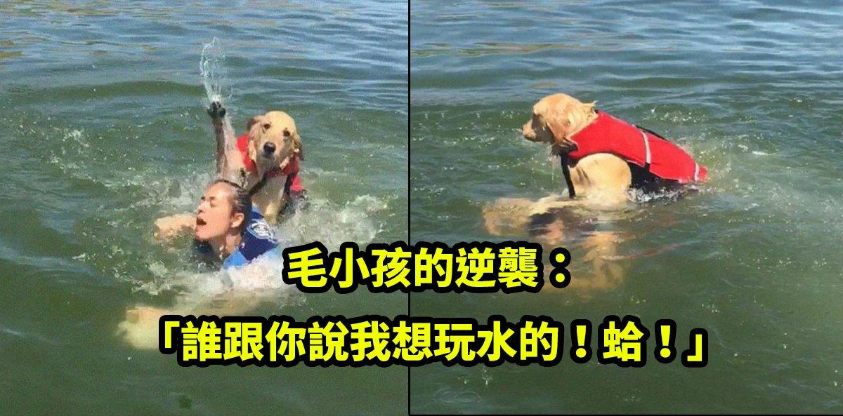 e68095e6b0b4e79a84e78b97.jpg?resize=648,365 - 黃金獵犬拒絕下海!直接把主人壓到滅頂,照片瘋傳成超負黑梗圖!