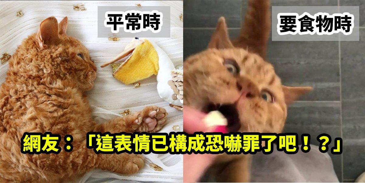 e8a88ee99bb6e9a39fe79a84e8b293.jpg?resize=1200,630 - 「人類把食物給我交出來!」橘貓討零食表情超猙獰,反而圈了一堆貓粉~