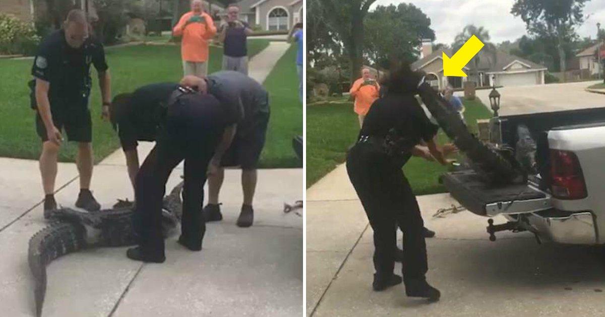 ec9db4eba684 ec9786ec9d8c23 1.jpg?resize=412,232 - Police Becomes Unconscious By Getting Struck On The Head By Crocodile