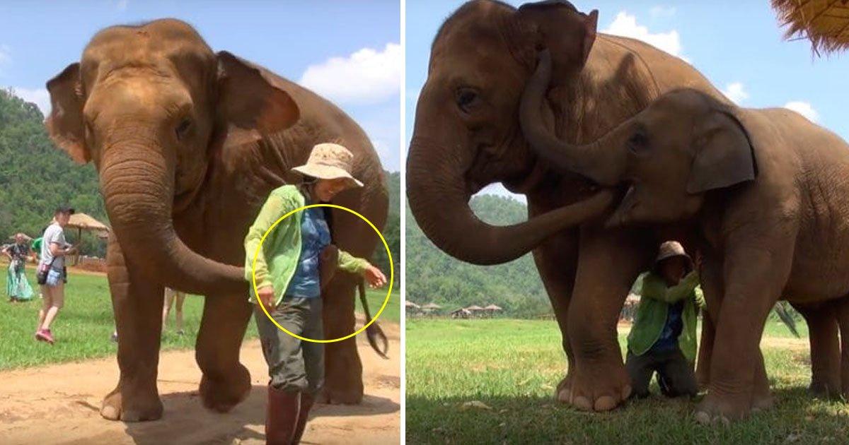 elephant.jpg?resize=412,232 - Une maman éléphant veut que le gardien chante une berceuse au bébé éléphant qui vient d'être sauvé